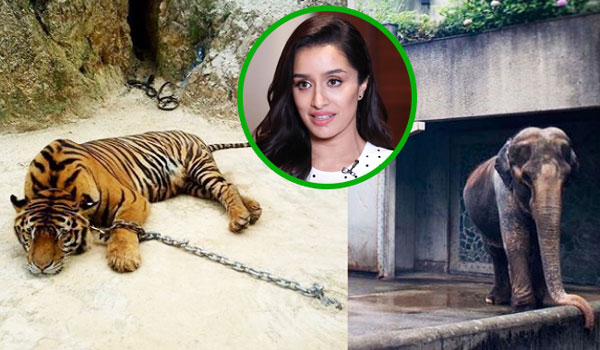 Shraddha-kapoor-voice-to-animals